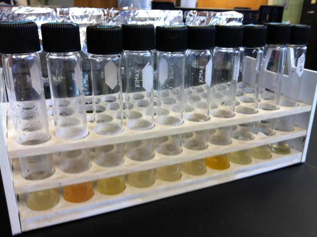 bacteria in tt